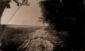 Tintype Freeman Vines' road