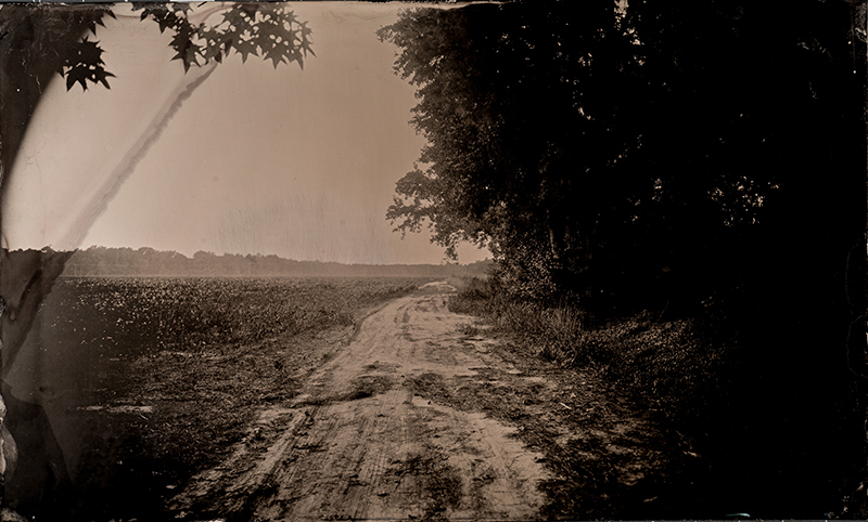 Tintype Freeman Vines' road